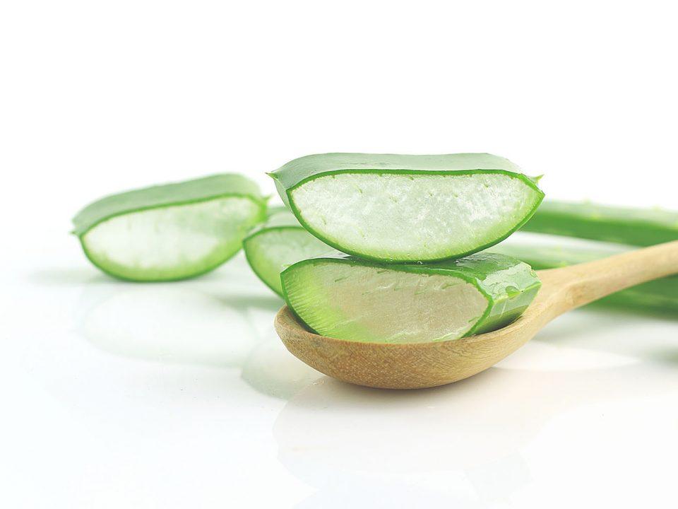 aloe vera for scalp repair